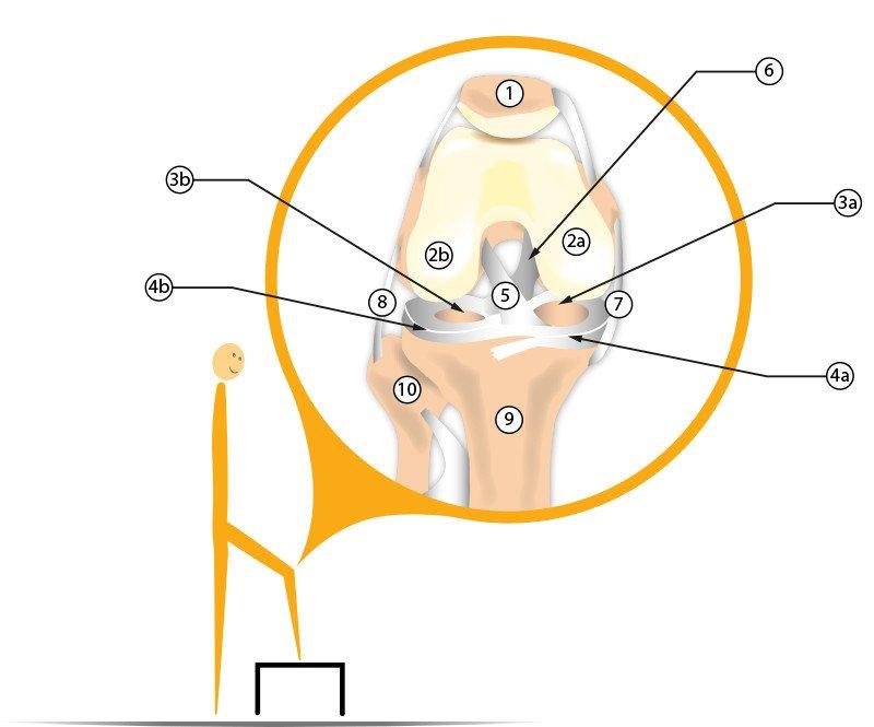 Knieschmerzen: Ursachen, Anatomie und Tipps – Dr. Topay